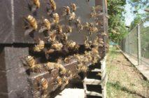Die Bienenstöcke sind zurück im Pfaffenthal!